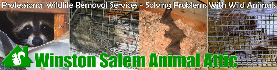 Kernersville  Animal Attic